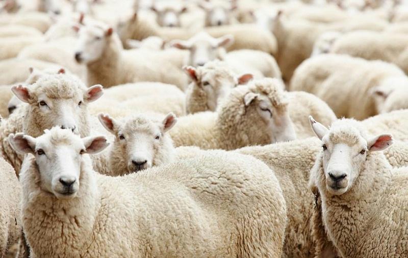 羊毛地毯 钻石地毯 地毯空气